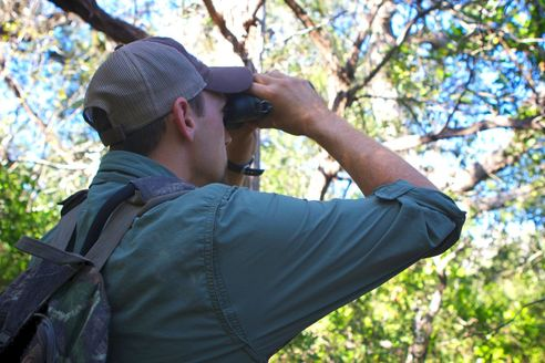 Person using binoculars in woods, Horizon Environmental Services Protected Species Services