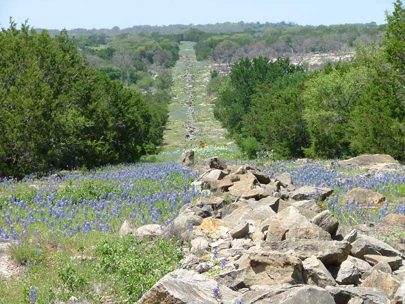 Environmental Path of flowers and rocks downhill between trees , Horizon NEPA Compliance Services